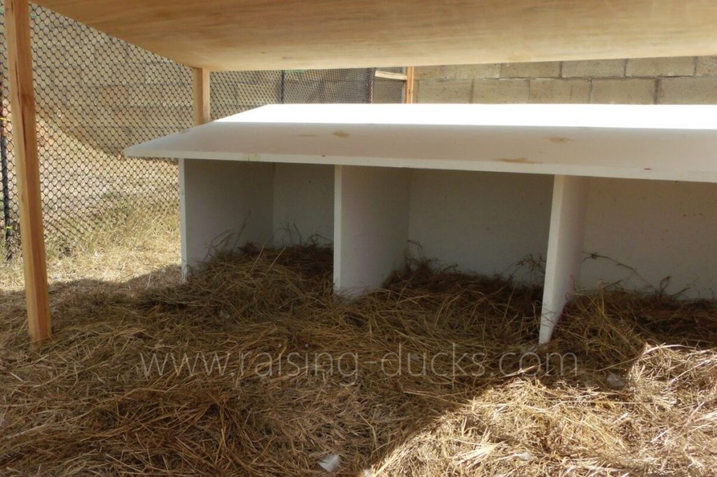 Nest boxes our Muscovy ducks didn't like