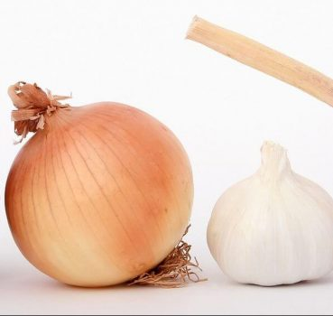 Ducks and Onions: Can Ducks Eat Onions?