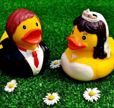 Do Ducks Need a Mate?