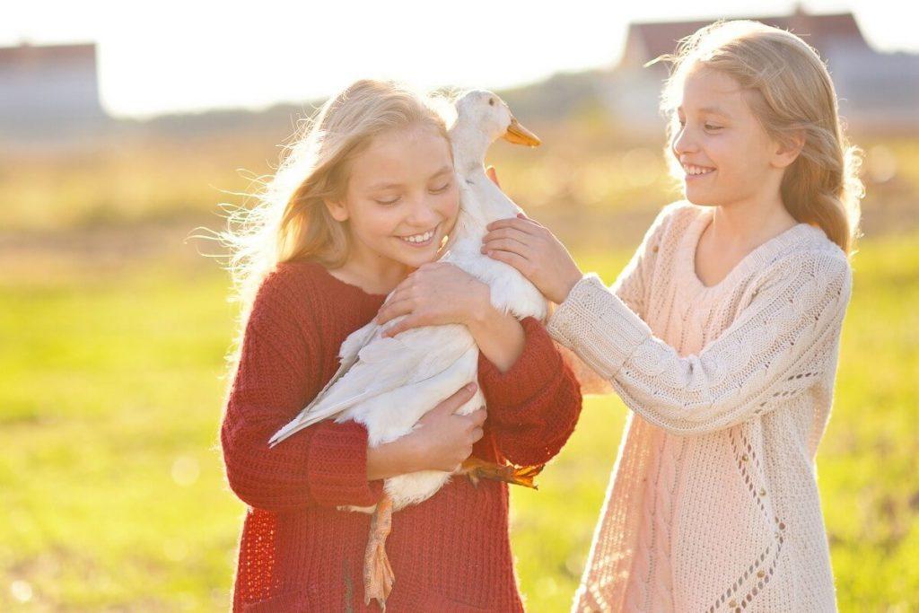 kids pet pekin duck
